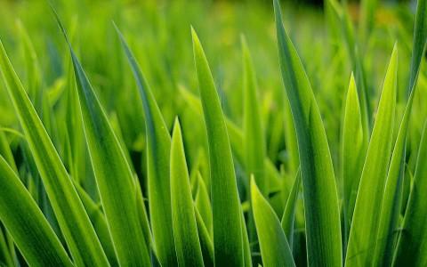 nature grass macro 1920x1200