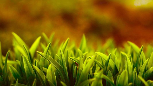 nature grass 1600x900