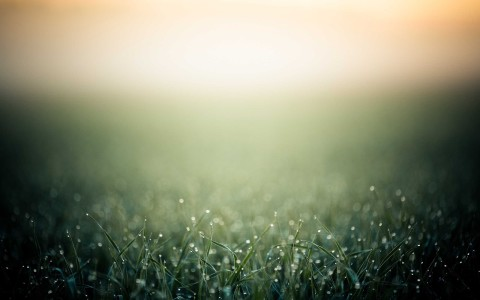 minimalistic grass bokeh dew blurred 2560x1600
