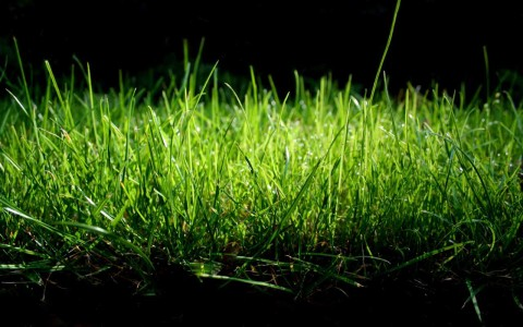 green nature grass 1280x800