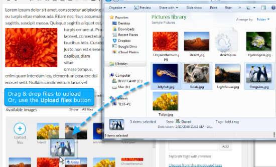 image wordpress that is pro