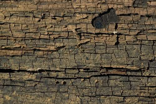 cracked-wood-1