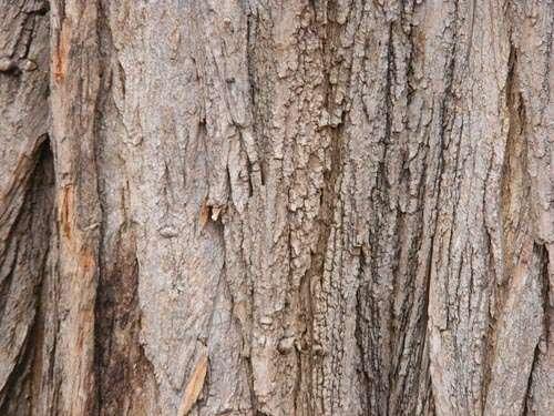 tree-wood-texture