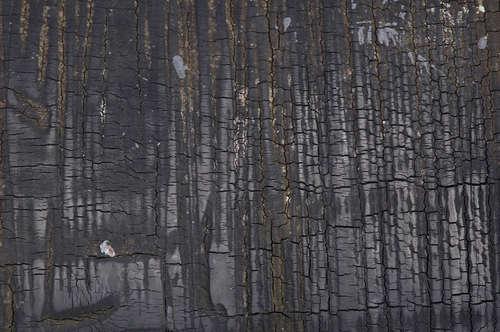 burned-wood-texture