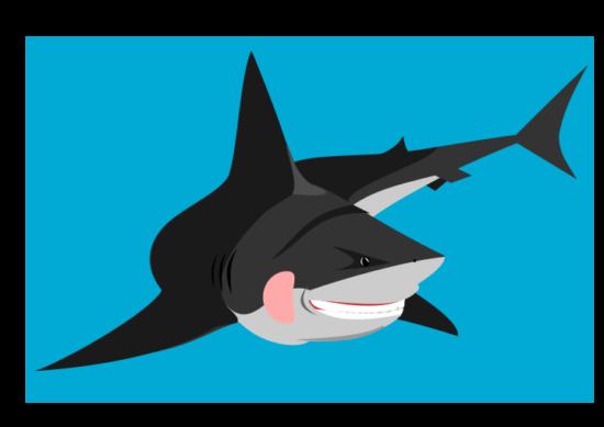 friendly_shark