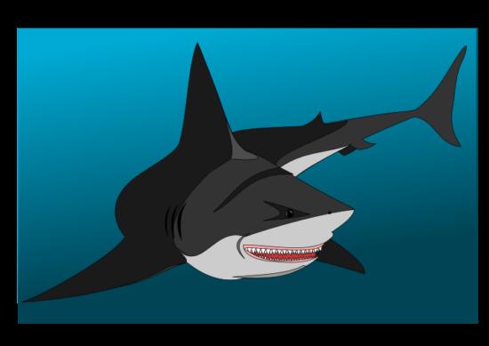 non_friendly_shark