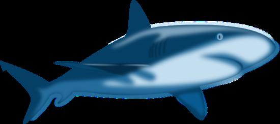 shark_shaded