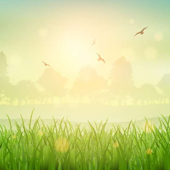 nature_background_of_a_grassy_landscape