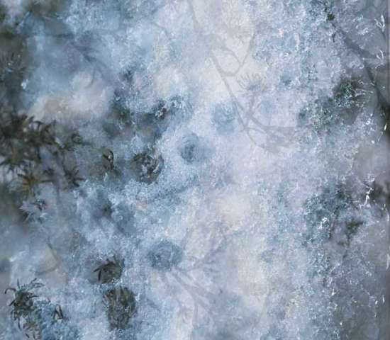 ice_and_snow_texture