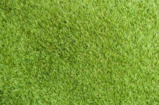 fresh_cover_background_beautiful_stadium_grass