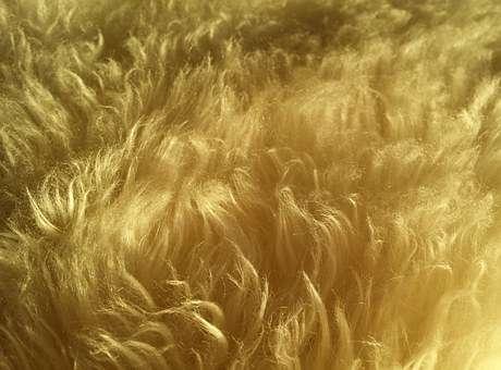 wool_fur_hair_soft_fluffy