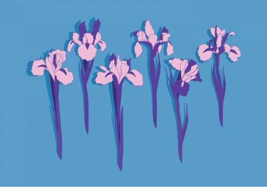 iris_flowers_vector