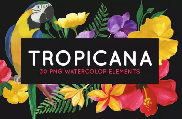 30_tropical_floral_watercolor_elements