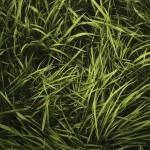 green grass 1920x1200