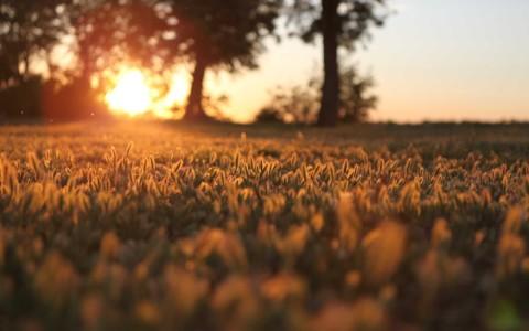 landscapes nature Sun trees grass 2560x1600
