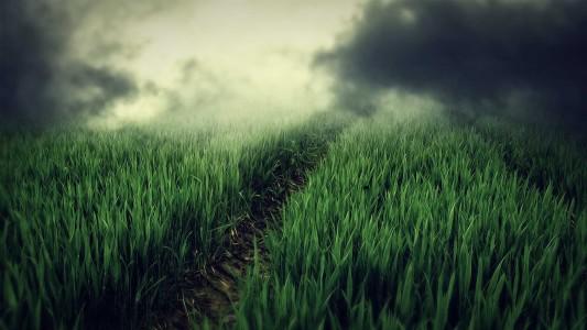 light green clouds nature grass fields paths hills fog plants 1920x1080