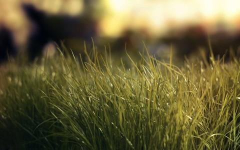 nature grass water drops 1920x1200