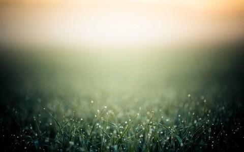 minimalistic grass bokeh dew blurred 2560x1600