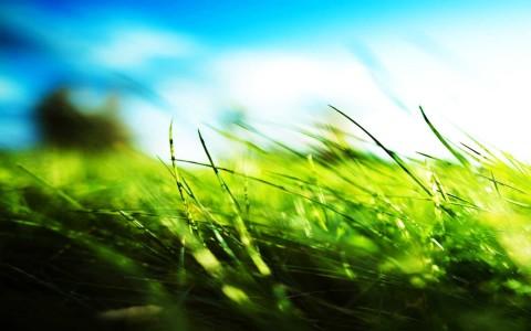 green grass peace 1680x1050