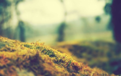 landscapes grass fields macro 2560x1600