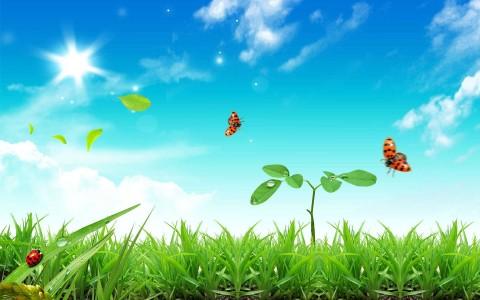 nature grass bugs photo manipulation 1920x1200