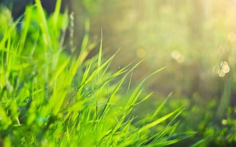 grass 1920x1200