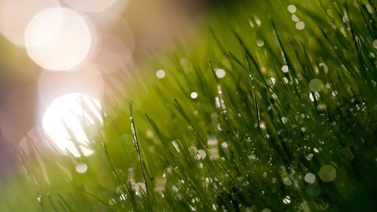 green nature grass water drops dew 1920x1080