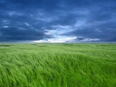 green clouds grass fields 1600x1200