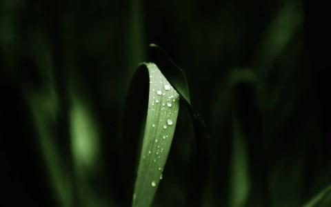 green nature grass water drops macro 1680x1050