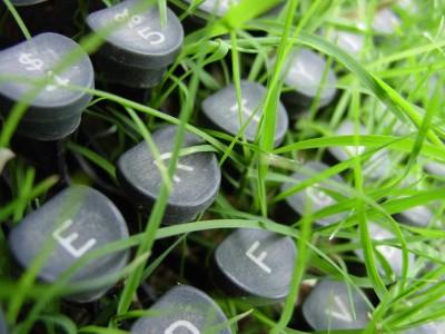 green close-up grass keyboards 1280x960