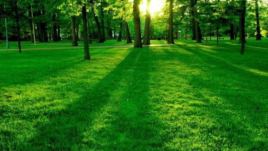 nature grass 1920x1200