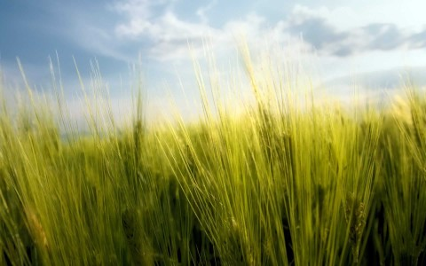 clouds landscapes nature grass fields wheat grain macro skyscapes 1920x1200