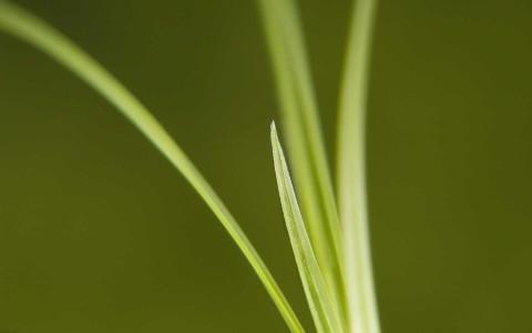 green grass macro 1920x1200