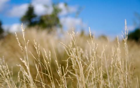 close-up grass blurry depth of field 2560x1600