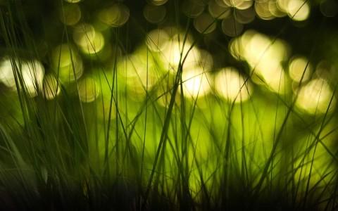 green nature lights grass bokeh macro depth of field blurred 1920x1200