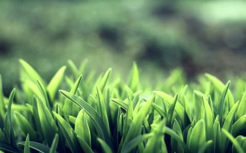 nature grass macro depth of field 2560x1600