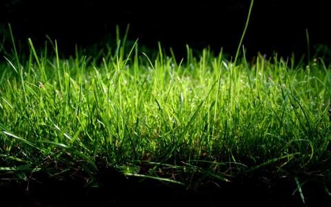 green nature grass 1280x800