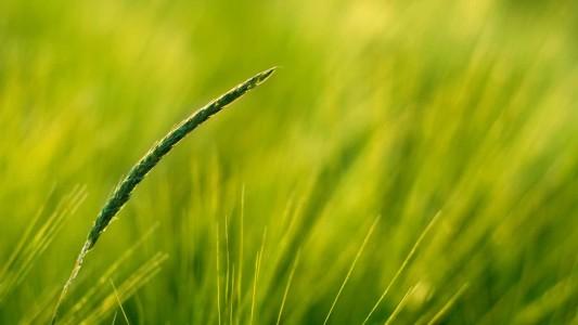 green nature grass 1920x1080