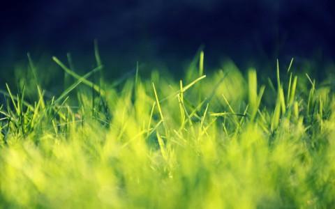 green nature grass sunlight 2560x1600