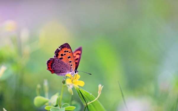 20 Awesome Butterfly Wallpaper Desktop Background Xdesigns