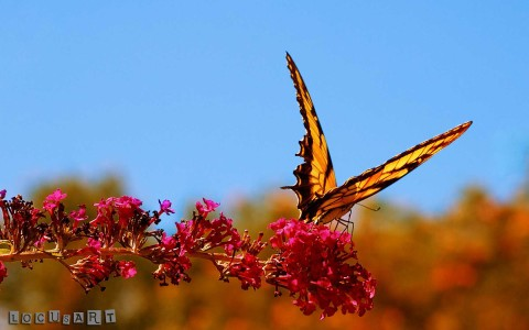 20 Awesome Butterfly Wallpaper